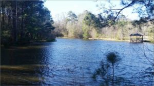 Nice View of the Lake Mary Ann Brown Preserve Hiking Trail