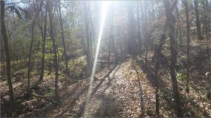 Sunbeams Shining down on the Trail - Mary Ann Brown Preserve
